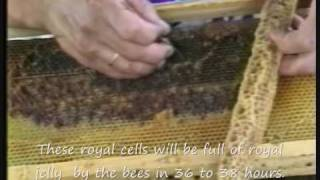 Production of genuine royal jelly. - www.meli-skouras.gr