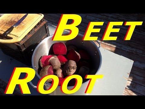 Cleaning & Freezing Beetroot #122 Heirloom Organic Vegetable Garden