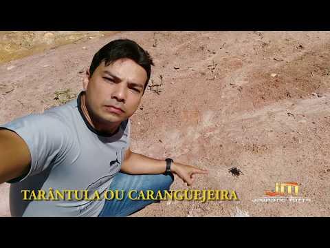 Caranguejeira Josagno Motta