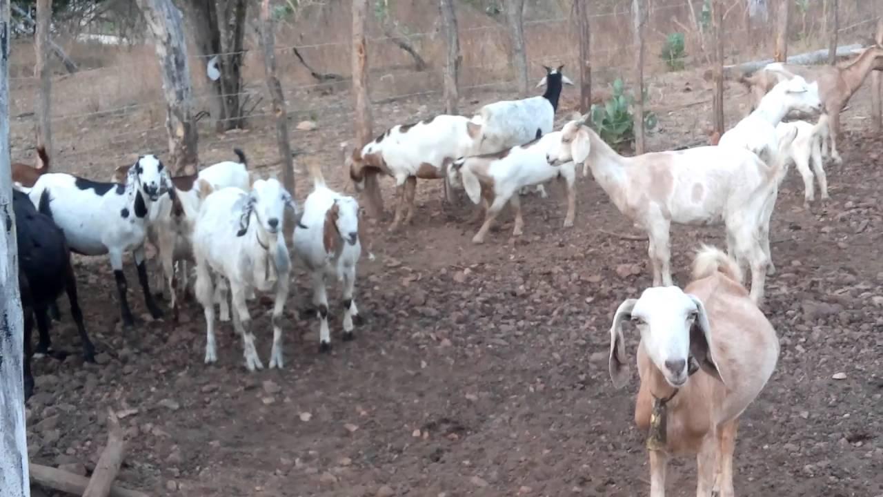 Fazenda De Bode