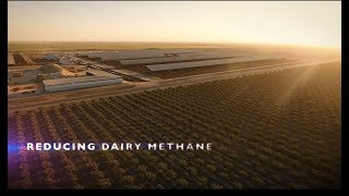 Climate-Smart Dairy