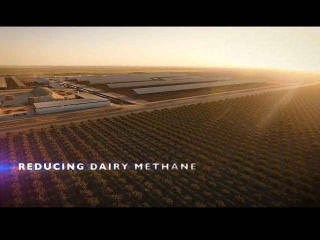 Planet-Smart Dairy