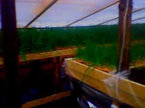 видео: НАША ТЕПЛИЦА