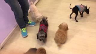 犬の保育園Preseaについてはコチラから!! http://presea-dog.com/