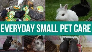 everyday small pet care