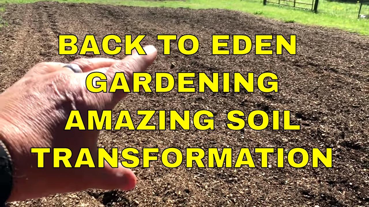 Back To Eden Gardening Amazing Soil Transformation Youtube