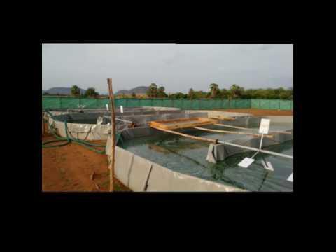 Spirulina farm - Vijayawada Guntur highway,