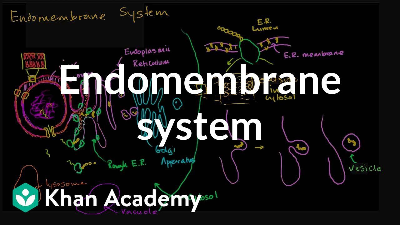 eukaryotic endomembrane system cell diagram 2008 chevy tahoe track rod problems structure of a biology khan academy