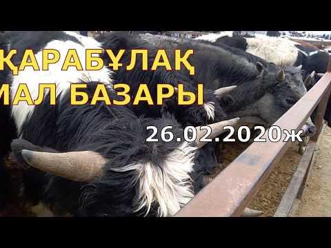 Қарабұлақ мал базары 26.02.2020 Карабулакский скотный рынок, horse, cow, ram
