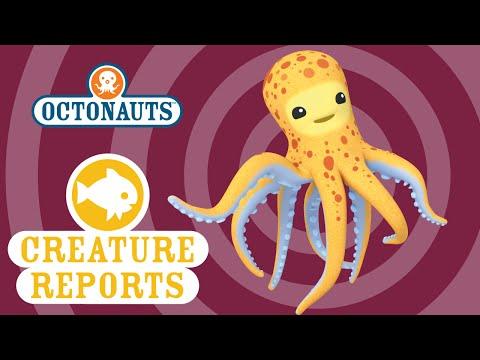 Octonauts: Creature Report - Octopus