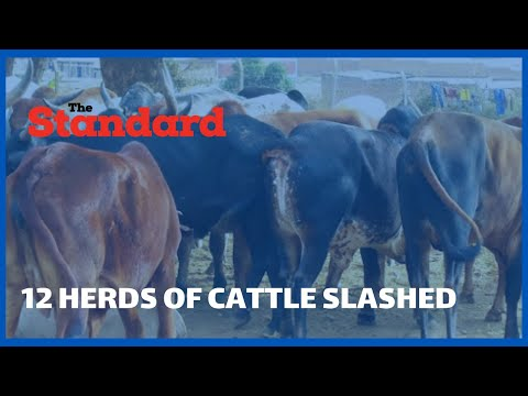 Tension runs high between two communities at Lelaitich area over the slashing of 12 herds of cattle