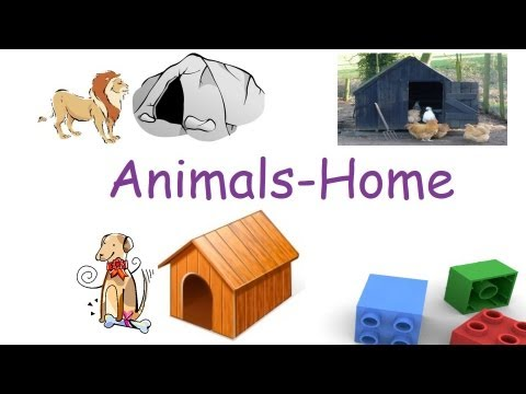 Animals And Their Homes For Children Flash Cards Youtube