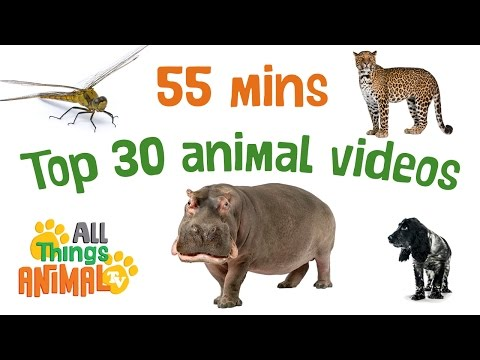 TOP 30 ANIMAL VIDEOS | Animal Playlist for children. 55 MINS LONG. Kids Videos. Preschool Learning.