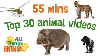 * TOP 30 AMAZING ANIMALS FOR KIDS * | Playlist | All Things Animal TV