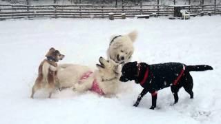 予想以上に雪が積もったfundogsさんで今シーズン初の雪遊び! 楽しくラ...