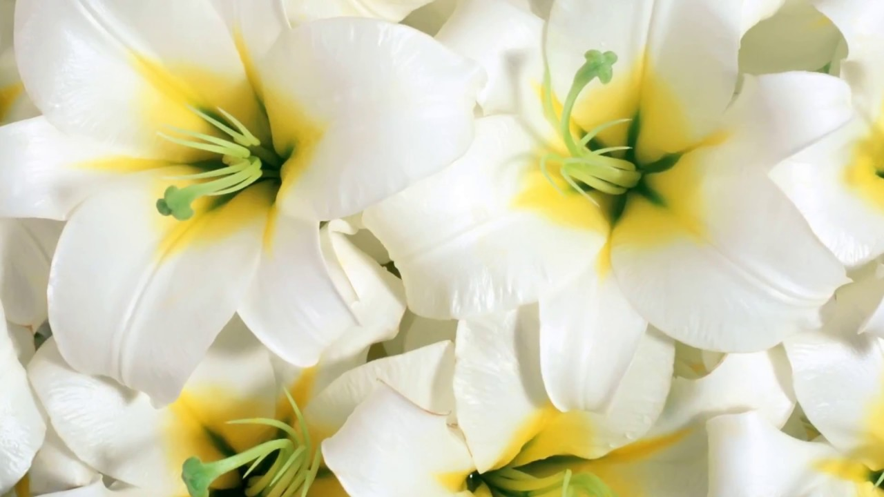 White lily flower garden youtube white lily flower garden izmirmasajfo