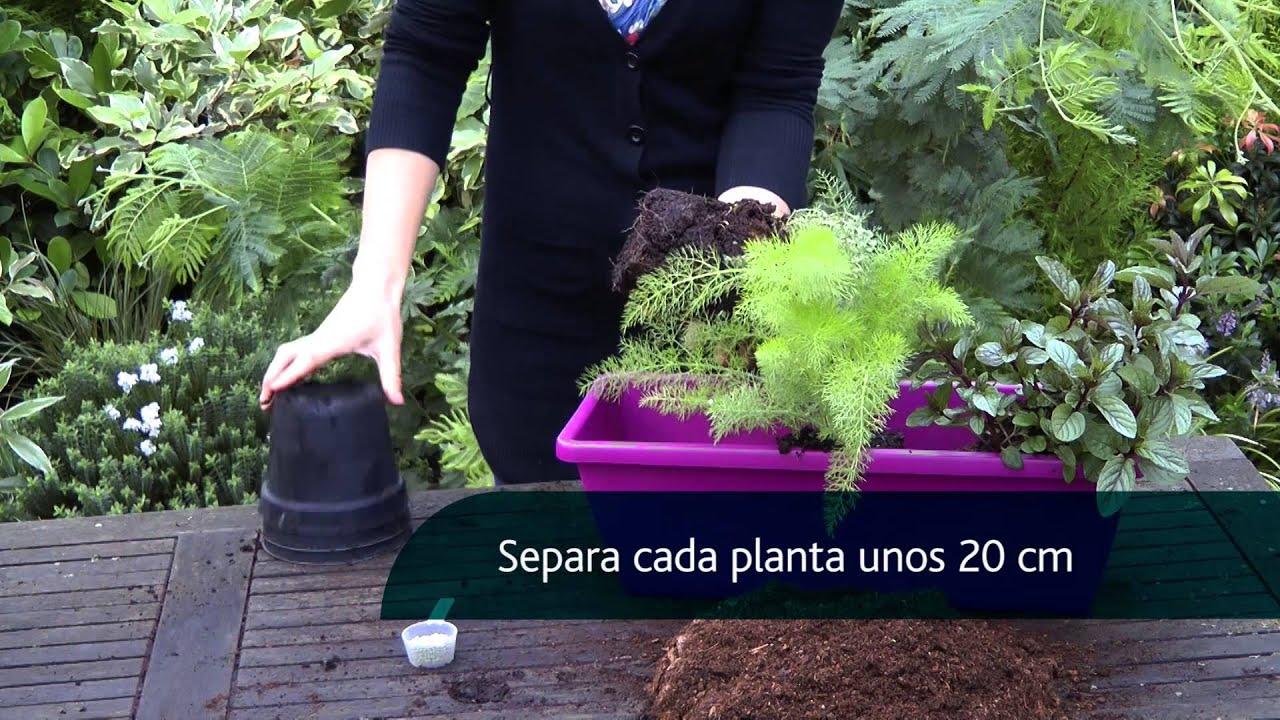 16 una jardinera con plantas arom ticas y culinarias youtube for Jardinera plantas aromaticas