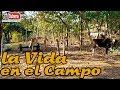 Como es la Vida en el Campo de el Salvador, SVL SV YS ...