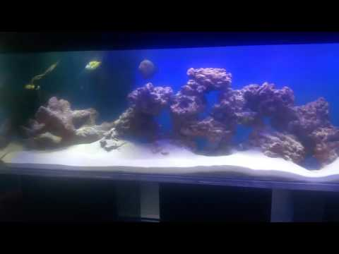 Fowlr triggerfish tank 125 gallon custom acrylic tank