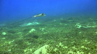 Sharm Beach Diving 2011 Part 1 of 3 Thumbnail