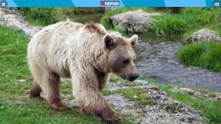 Животные леса. Звуки животных леса.