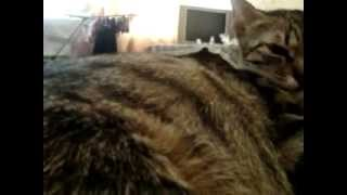 Котята в животе у моей Муськи