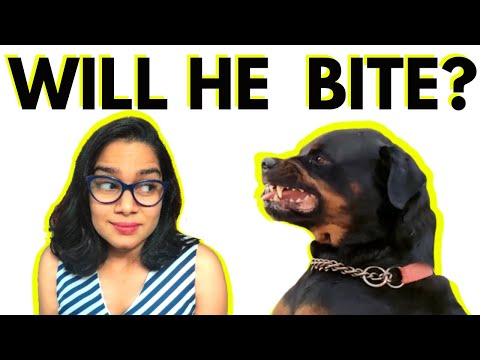 Rottweiler Myths – Busting 4 Common Beliefs About Rottweilers