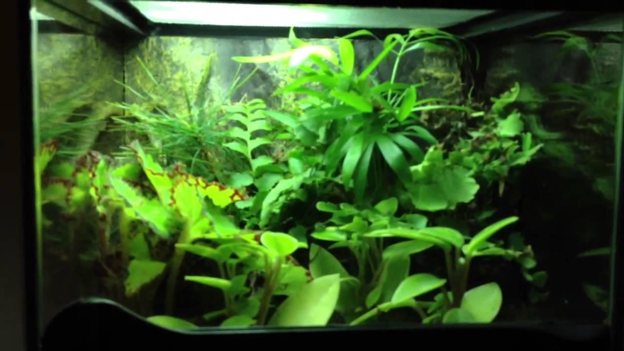 Fish tank terrarium - Aquarium Terrarium Update