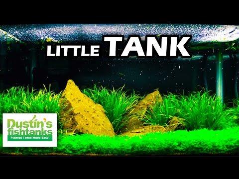 Little tank talking little tanks small aquarium setups for Dustins fish tanks