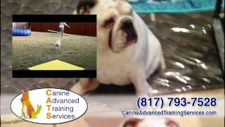 Canine Advanced Training Services | Dog Obedience & Behavior Group/private Classes In Fort Worth, Tx
