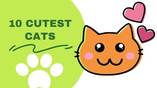 10 cute cat breeds you did not know :: 10 Cute cat breeds in the world