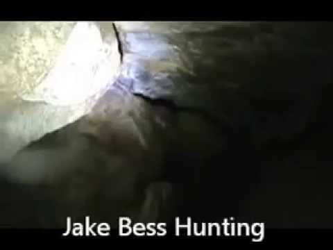 Bear In cave Jake Bess Hounds