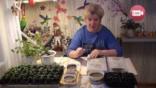 Персональный блог садовода и огородника Светланы Кацаповой 23 выпуск (посев перцев)