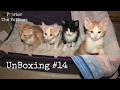 Kitten Unboxing #14 😺 New Foster Litter Revolution Flea Treatment