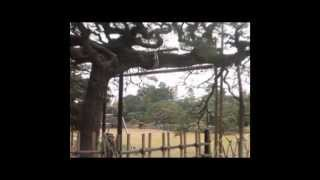 落ちぶれた栗林公園・未完成/Ritsurin-Garden which came down・incomplete