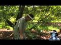 Florida's Venomous Snakes 09/10 - Rattlesnake Venom Extraction