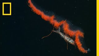 See Secret Eating Habits of Deep-Sea Dwellers | National Geographic