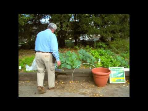 Protecting your plants from frost - YouTube