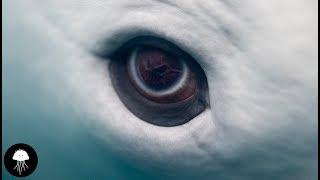 Quel effet ça fait d'être une baleine ? 🐳 - DBY #36