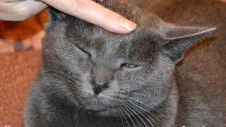 Самые ласковые кошки? Мой ласковый и нежный кот! | affectionate cat