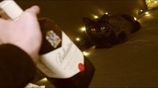 Kot mówi w wigilię!
