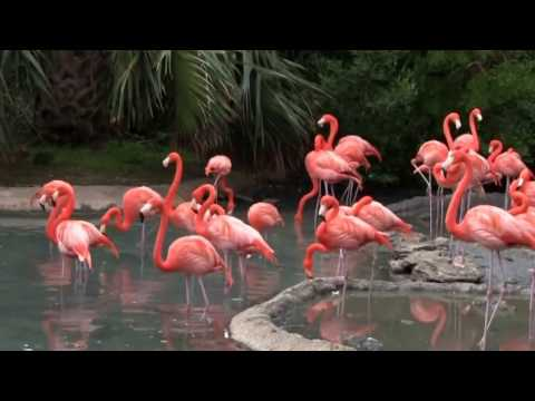 My day at the Aquarium and Zoo in Bermuda, 2017 HD