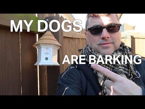 My Dogs Are Barking | Petsafe Elite Outdoor Bark Control Unboxing