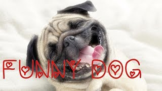 ♥Funny Dogs video ♥ for KIDS