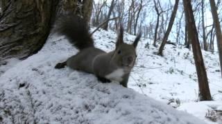 好奇心旺盛なエゾリス 白いエゾリス 検索動画 11