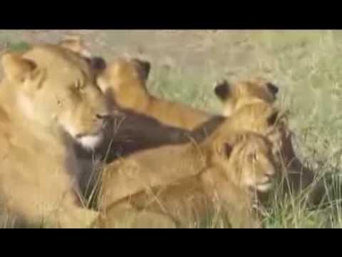 absolute safari-Kenya- video-2_28-02-2013