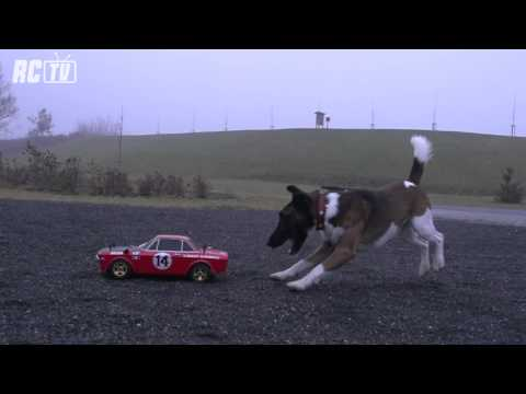 DOG ATTACK THE CAR (SLOW MOTION)