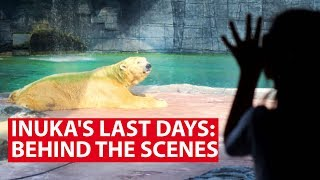 Inuka's Last Days: Behind The Scenes With Singapore's Last Polar Bear | Talking Point | CNA Insider