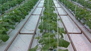 видео Доход на хищных растений – продажа и выращивание