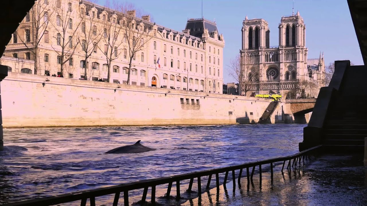 une baleine dans la seine paris youtube. Black Bedroom Furniture Sets. Home Design Ideas